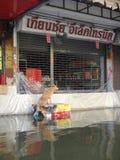 Un perro de la calle intenta mantener seco una calle inundada en Rangsit, Tailandia, en octubre de 2011 Foto de archivo libre de regalías