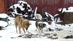 Un perro de la calle toma la comida de un perro nacional, perros perdidos, comida de perro metrajes