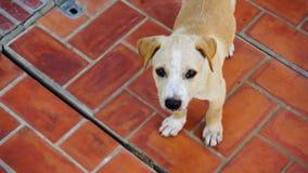 Un perro de perrito pobre marrón en el piso del ladrillo rojo foto de archivo