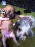 Un perro del bebé Fotos de archivo libres de regalías