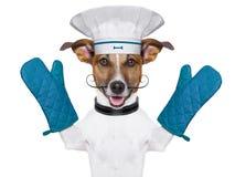 Cocinero del cocinero del perro foto de archivo