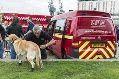 Un perro del departamento de bomberos isprepared para la acción Foto de archivo libre de regalías