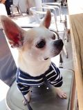 Un perro del muchacho Imágenes de archivo libres de regalías