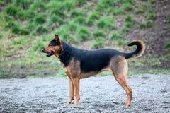 Un perro del mutt listo para jugar Fotografía de archivo