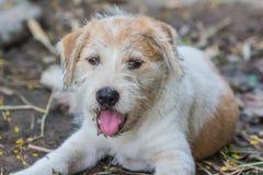 Un perro del potrait Imagen de archivo libre de regalías