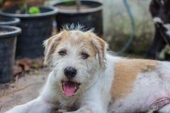 Un perro del potrait Fotos de archivo