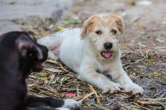 Un perro del potrait Foto de archivo