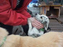 Un perro del refugio imagenes de archivo