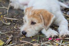 Un perro del retrato Imagen de archivo libre de regalías