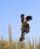 ¡Un perro del vuelo! Foto de archivo libre de regalías