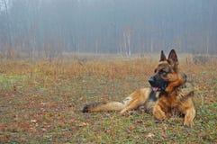 Un perro en bosque del otoño Imagenes de archivo