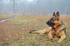 Un perro en bosque del otoño Imágenes de archivo libres de regalías