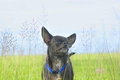 Un perro en campo de hierba Foto de archivo
