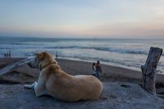 Un perro en Echo Beach en Canggu, Bali imágenes de archivo libres de regalías