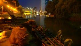 Un perro en el banco de la noche del ` s del río, contra la perspectiva de la ciudad nocturna se enciende metrajes