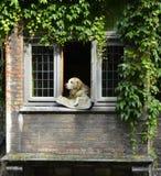 Un perro en el Bruge Fotografía de archivo