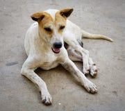Un perro en el camino rural Fotografía de archivo libre de regalías