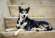 Un perro en el camino rural Fotografía de archivo