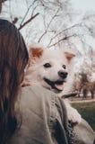 Un perro en el hombro foto de archivo libre de regalías