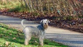 Un perro en el parque Imagen de archivo