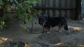 Un perro en el pueblo almacen de video