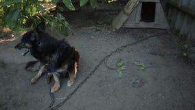 Un perro en el pueblo almacen de metraje de vídeo