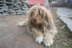 Un perro en el pueblo de Nepal, paisaje en el circuito de Annapurna, emigrando Imagen de archivo