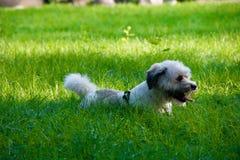 Un perro en hierba imagen de archivo