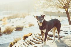Un perro en la calle Imagen de archivo