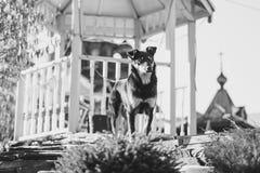 Un perro en la calle Imagenes de archivo