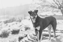 Un perro en la calle Fotos de archivo