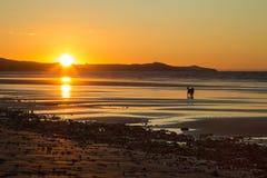 Un perro en la playa durante puesta del sol Fotos de archivo