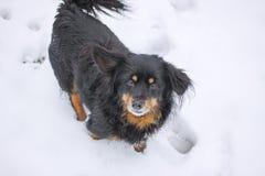 Un perro en nieve del invierno Imagenes de archivo