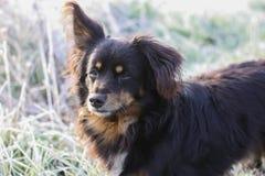 Un perro en parque Fotos de archivo