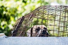 Un perro en un refugio para animales Imagenes de archivo