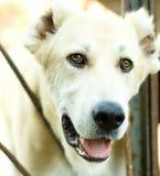 Un perro en un refugio para animales Imágenes de archivo libres de regalías