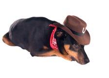 Un perro en una mentira del sombrero y de la bufanda de vaquero Aislado en el backgro blanco Foto de archivo libre de regalías