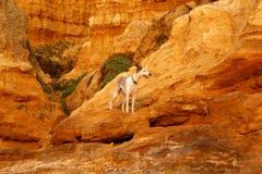 Un perro entre las formaciones geológicas extrañas debido a la corrosión en el peñasco rojo en Black Rock, Melbourne, Victoria, A