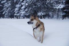 Un perro está caminando en una nieve Foto de archivo