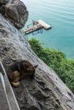 Un perro está durmiendo en el acantilado Imágenes de archivo libres de regalías