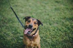 Un perro feliz Imágenes de archivo libres de regalías