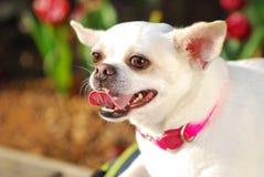 Un perro feliz en jardín Imagenes de archivo
