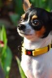 Un perro feliz en jardín Fotografía de archivo libre de regalías