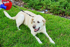 un perro grande Fotos de archivo libres de regalías
