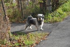 Un perro gris hermoso en un jardín público fotografía de archivo