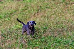 Un perro joven en un paseo en el parque fotos de archivo