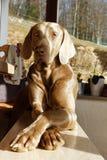 Un perro joven en primer Foto de archivo