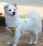Un perro lindo imágenes de archivo libres de regalías