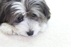 Un perro lindo Foto de archivo libre de regalías
