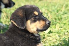 Un perro más bueno. Imagen de archivo libre de regalías